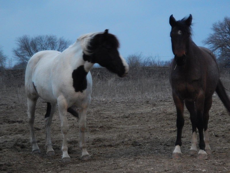 Gypsy and Storm (1)